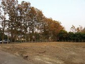 Beautiful Land for sale in Chiangmai